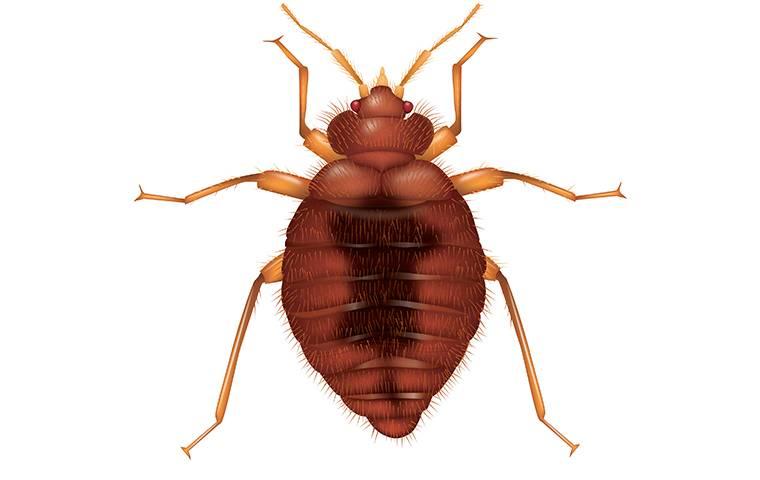 a bat bug illustration