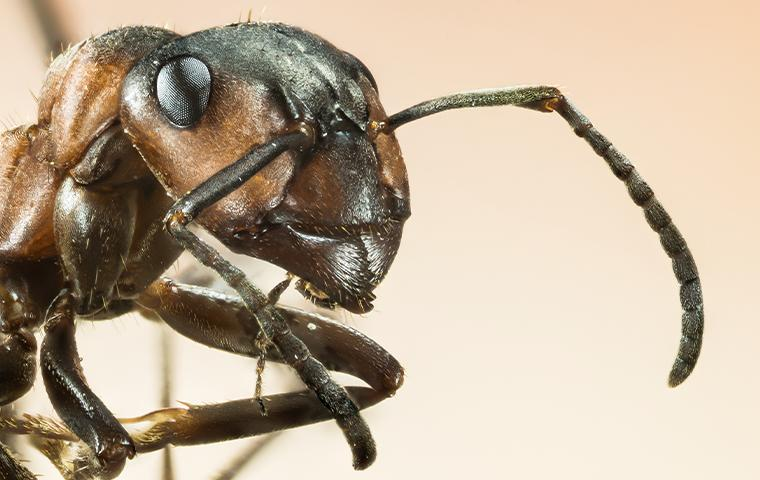 close up of ant