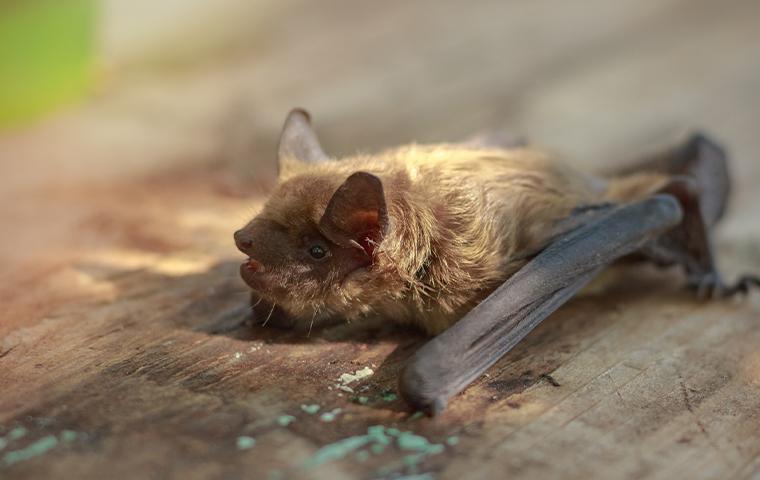 brown bat on wood