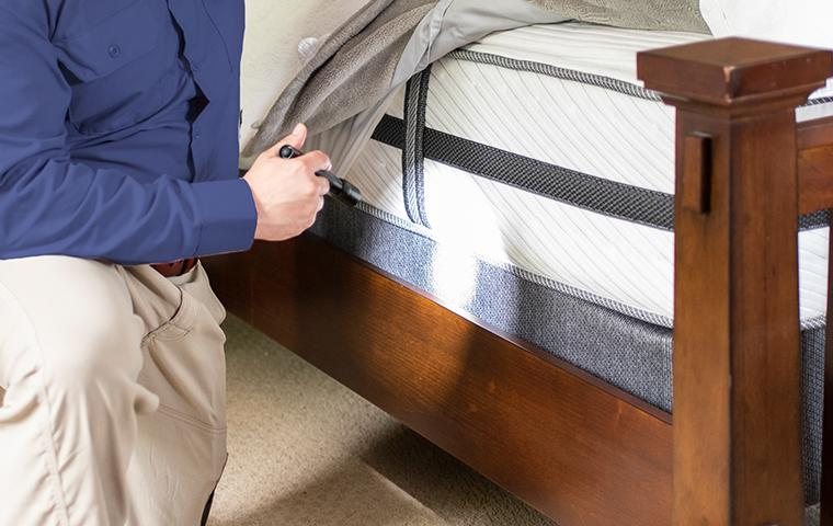 tech examining bed for bugs