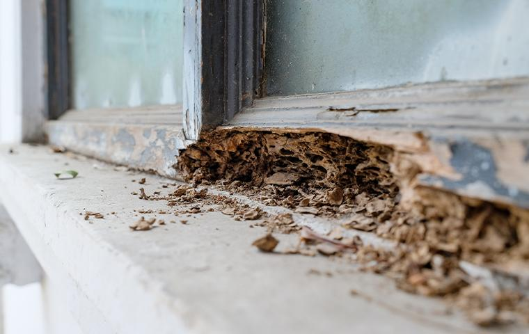 wood damage to window