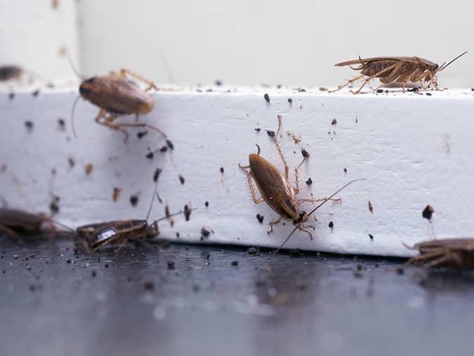 roaches crawling across kitchen floor