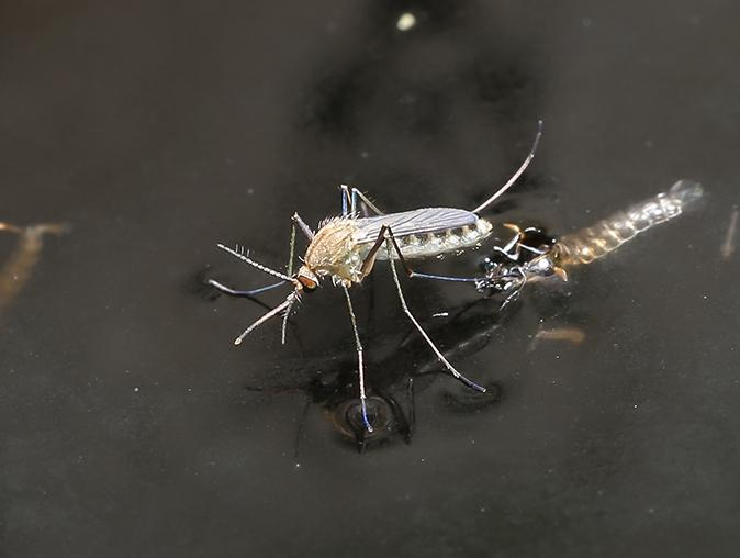west nile virus carrying mosquito outside of a new jersey home