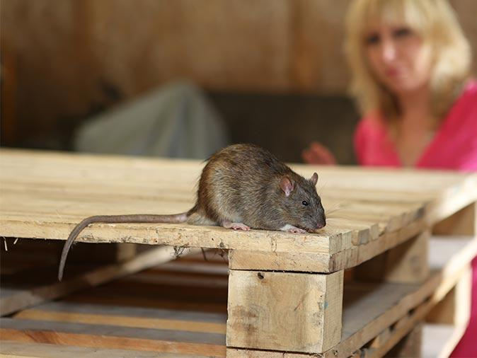 rodent in house in south plainfield nj