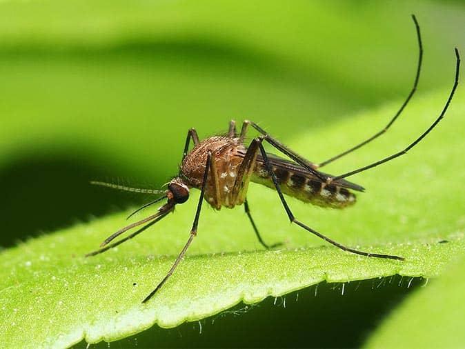mosquito in ewing nj yard