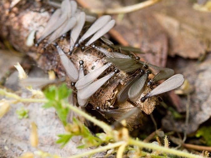 an off structure termite swarm in clark, nj