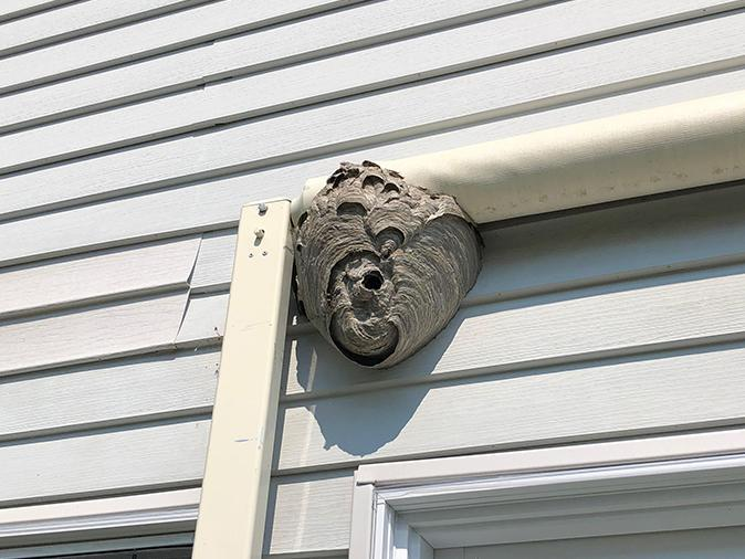 wasp nest on NJ home