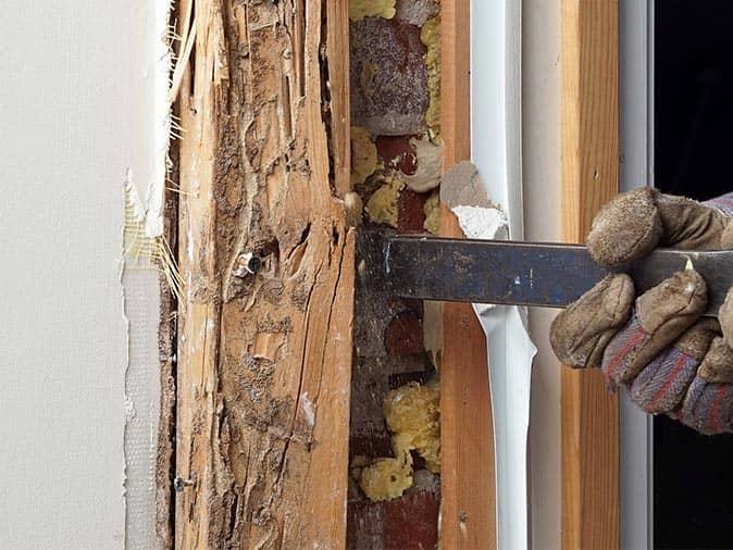 termite damage in a nj home