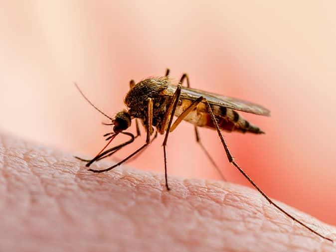 mosquito sucking blood from a new jersey resident on porch
