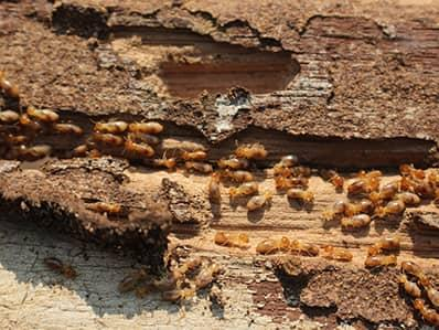 termite damage in a new jersey home
