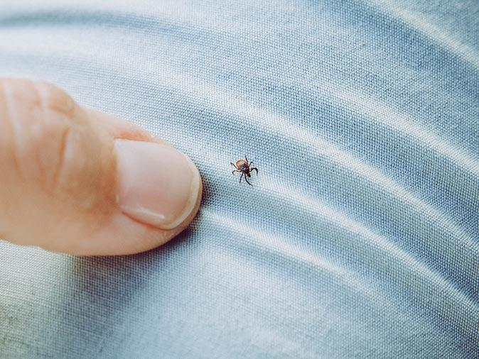 tick crawling on new jersey homeowner after they were just outside