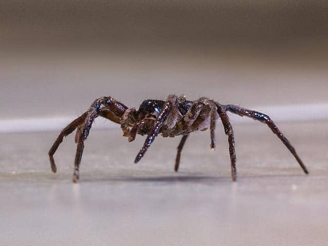 spider crawling across bathroom floor in new jersey home