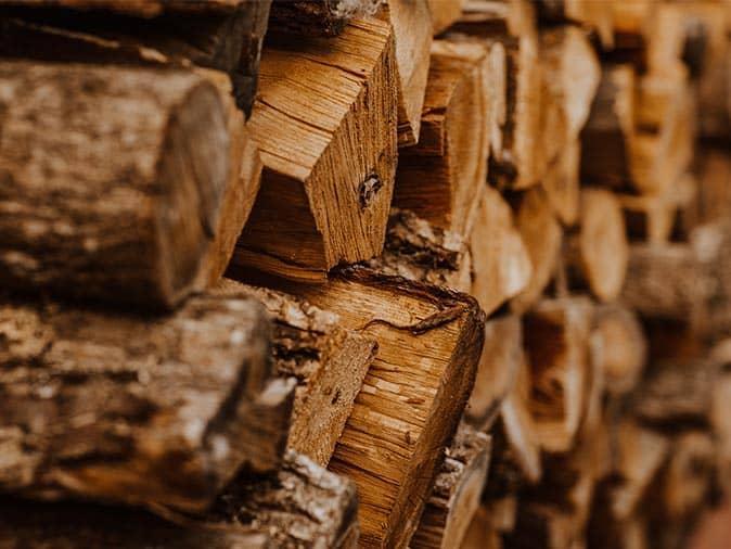wood pile where carpenter ants nest over the witner