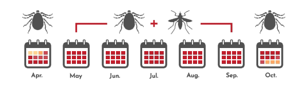 mosquito and tick treatment schedule from arrow pest control