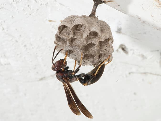 paper wasps hanging by its new above a new jersey front door