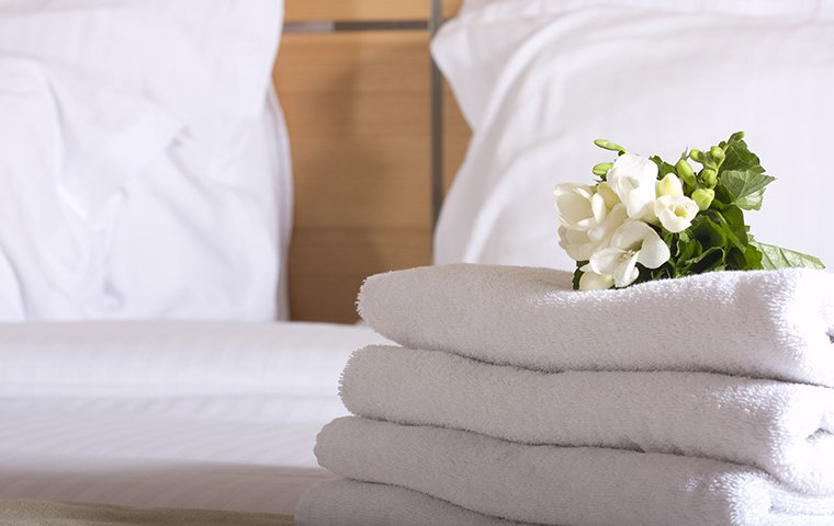 folded towels on a hotel bed