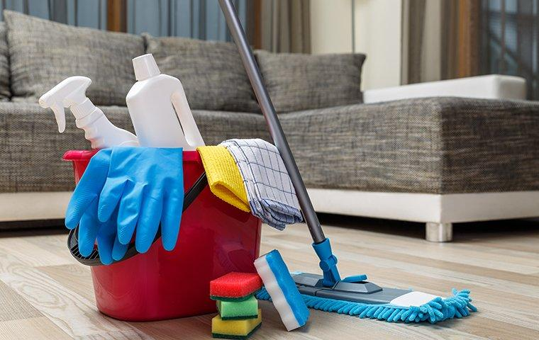 spring cleaning for pest prevention