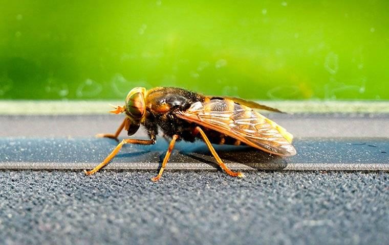 a hornet on a window sill