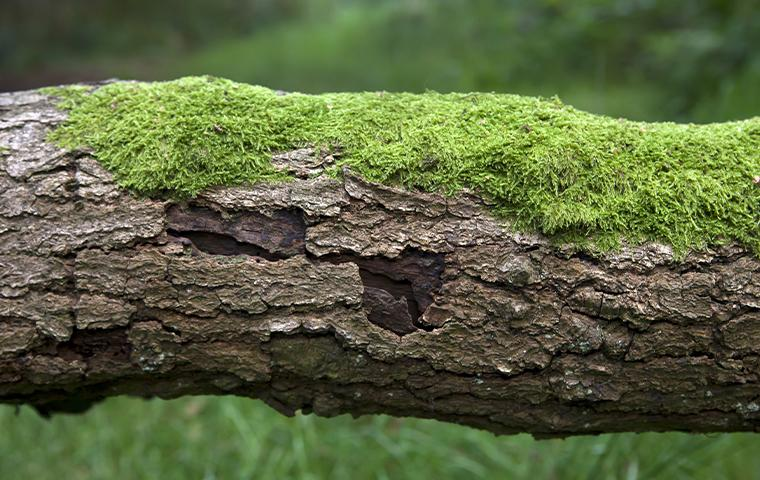 moss on a tree trunk