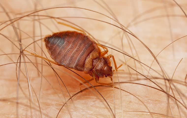 a bed bug on a persons skin in byron illinois