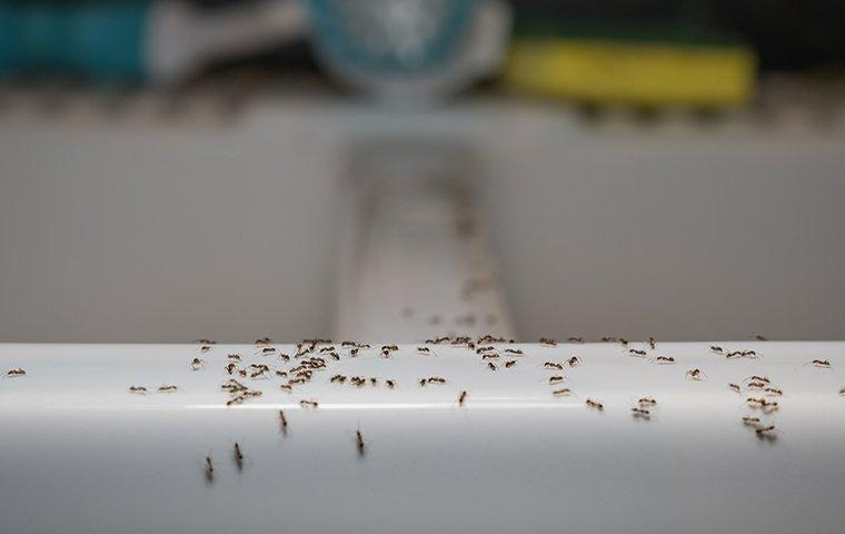 ants crawling on tub