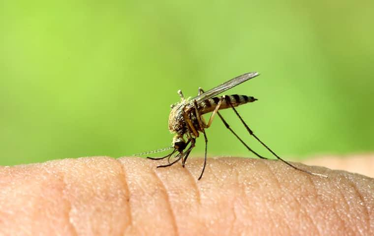 a mosquito biting a persons finger in illinois