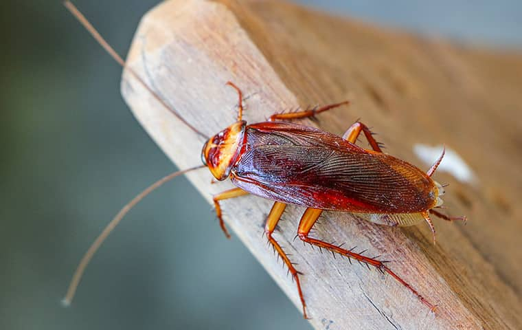 a cockroach on a chair in elgin illinois