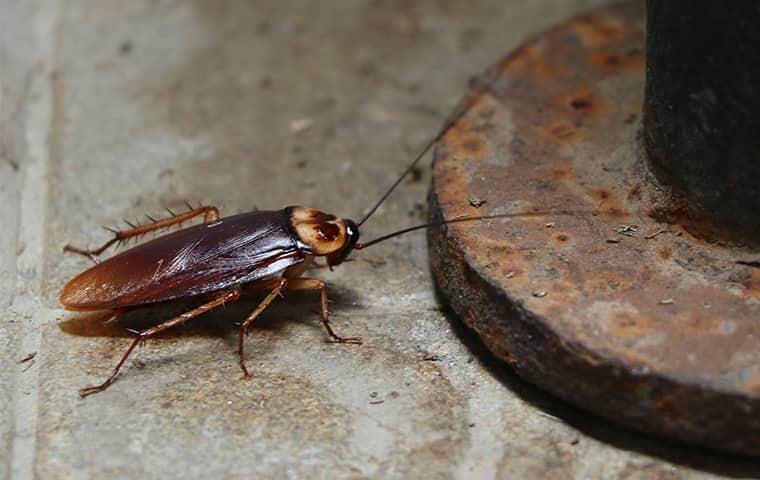a cockroach inside a bathroom in dekalb illinois