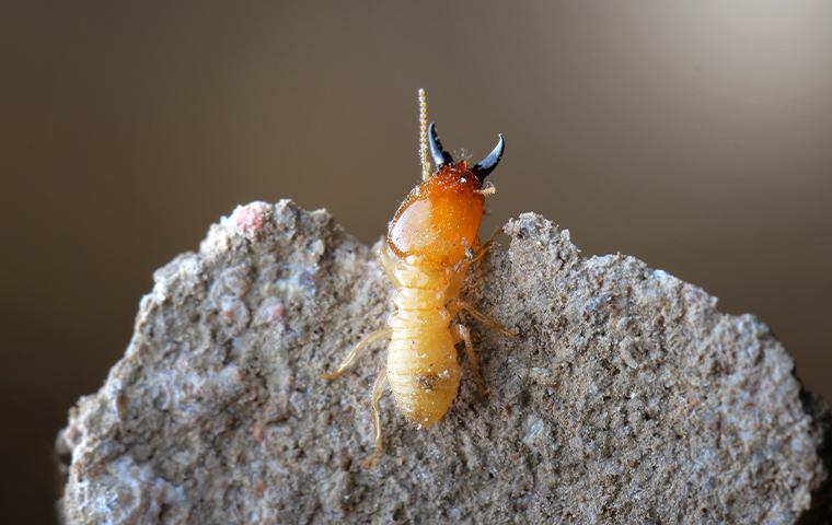 a termite on a dirt mound