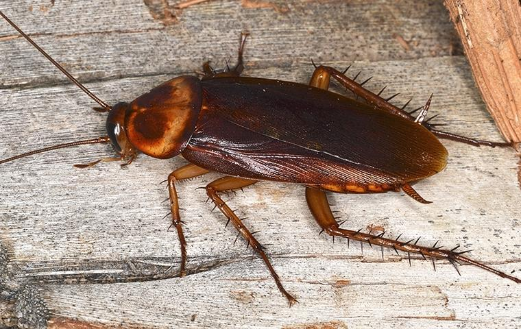 a cockroach on wood