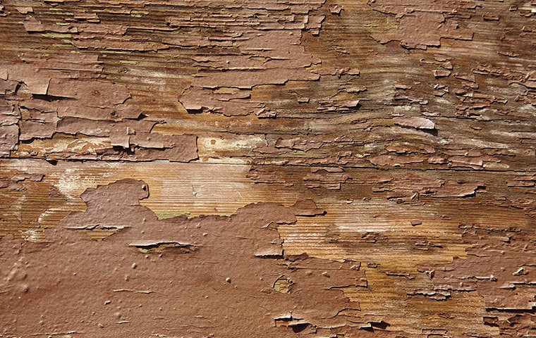 wood and paint damaged by moisture