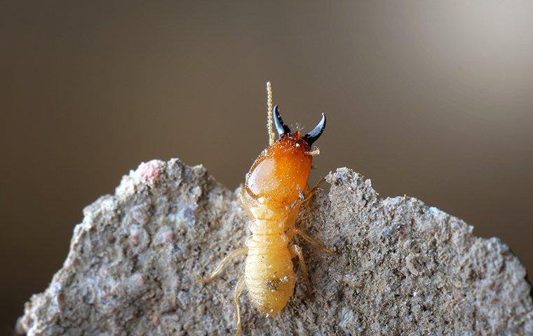 a termite climbing up its nest