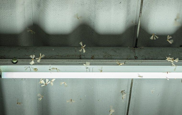 termite swarmers flying around a garage light