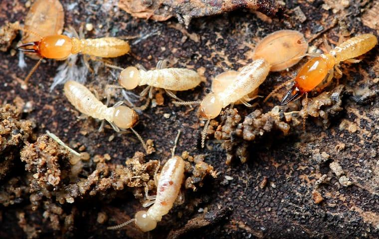 termite on the ground