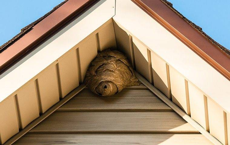 stinging insect nest in corner of roof