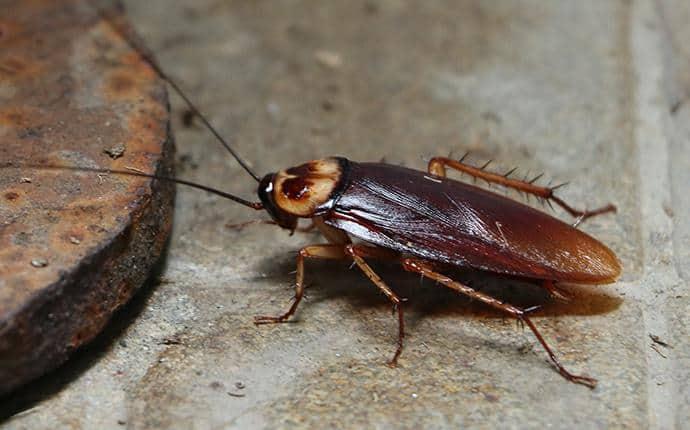 american roach in summitview wa
