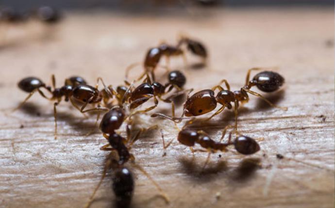 ants crawling on wood