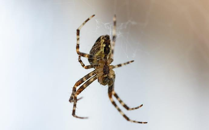 a house spider spinning its web inside of a central washington home