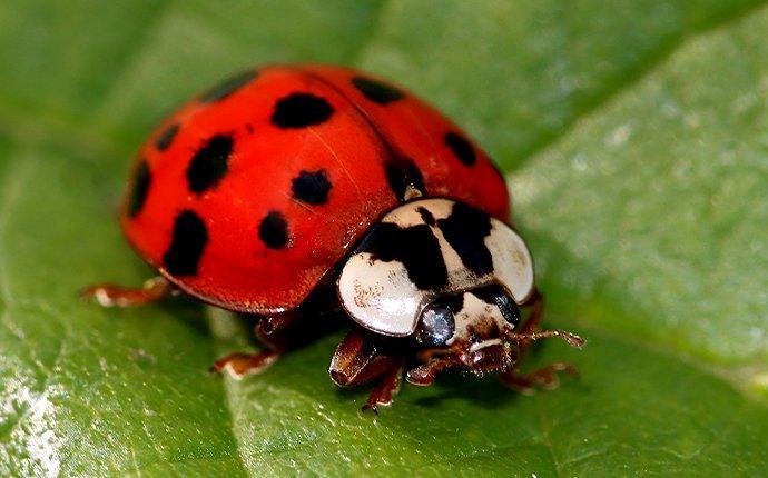 an up close image of a lady bug on a leaf