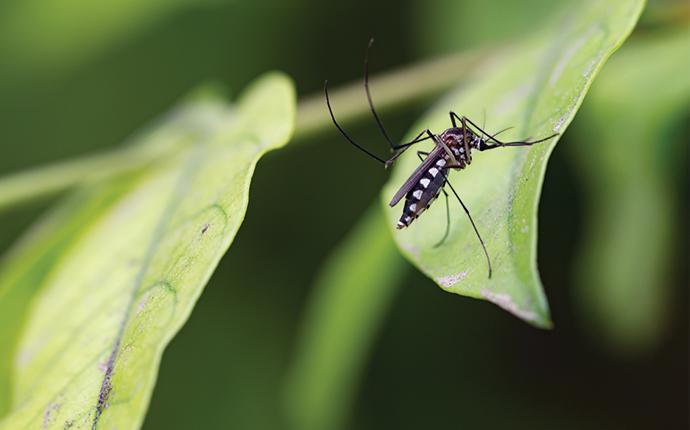 a mosquito on a plant outside