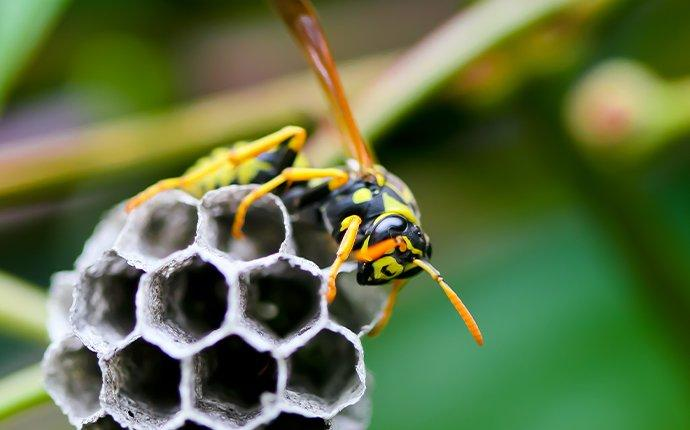 a paper wasp crawling on a next in a tree
