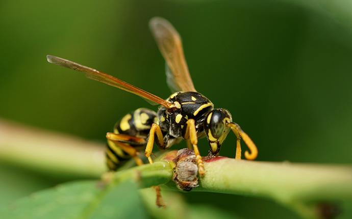 awasp on a stem in a yard