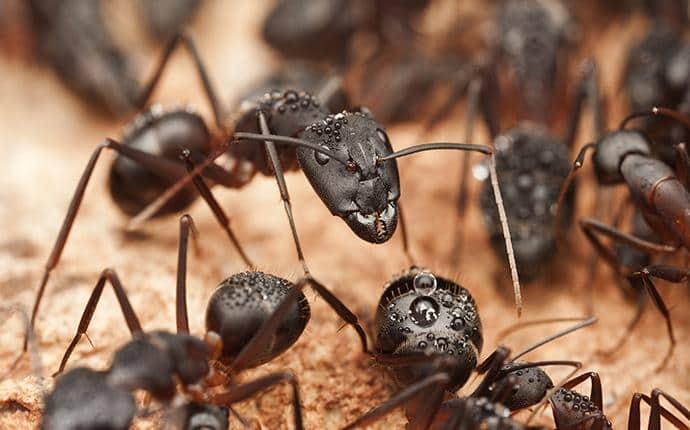 carpenter ants on a log in washington
