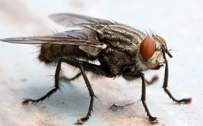 cluster fly on floor