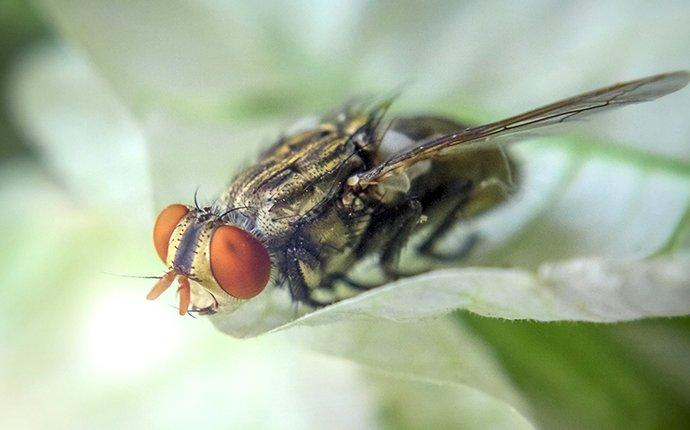 cluster fly on plant