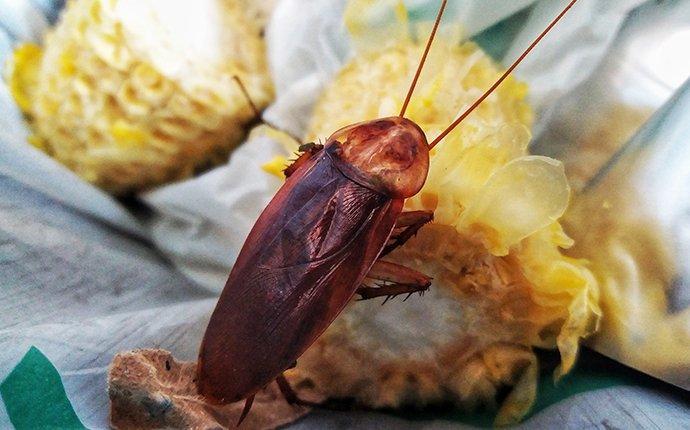cockroach crawling in trash