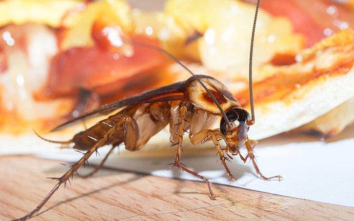 cockroach crawling on food