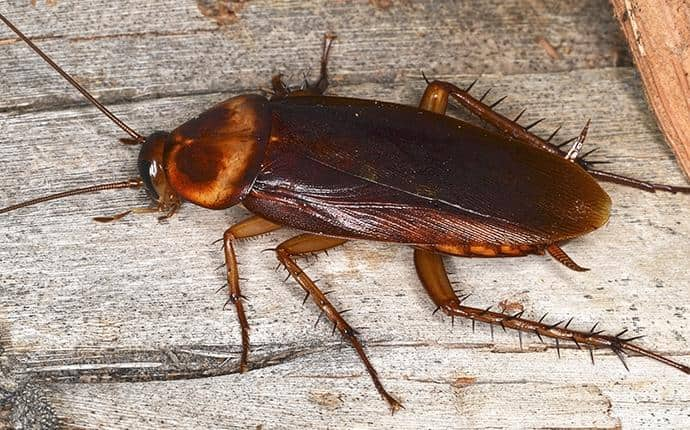 cockroach on the floor of a washington home