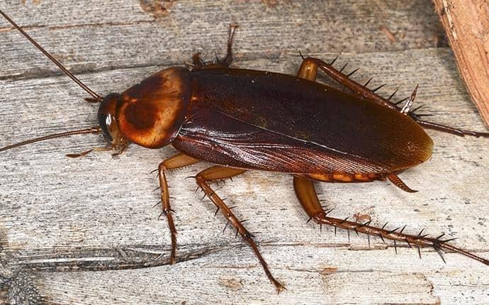 cockroach on the floor of a washington home