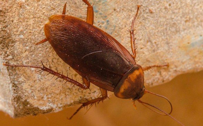 cockroach in kitchen